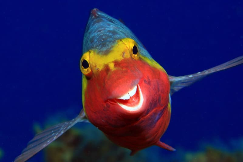 Nature Story: smilie fish Arturo Telle Thiemann photo Photography funny animals funny quiz questions happy birthday funny animals weird animals funny pictures of animals funny photos cool photos 2020 really cool photos download Comedy Wildlife Photography Awards 2020