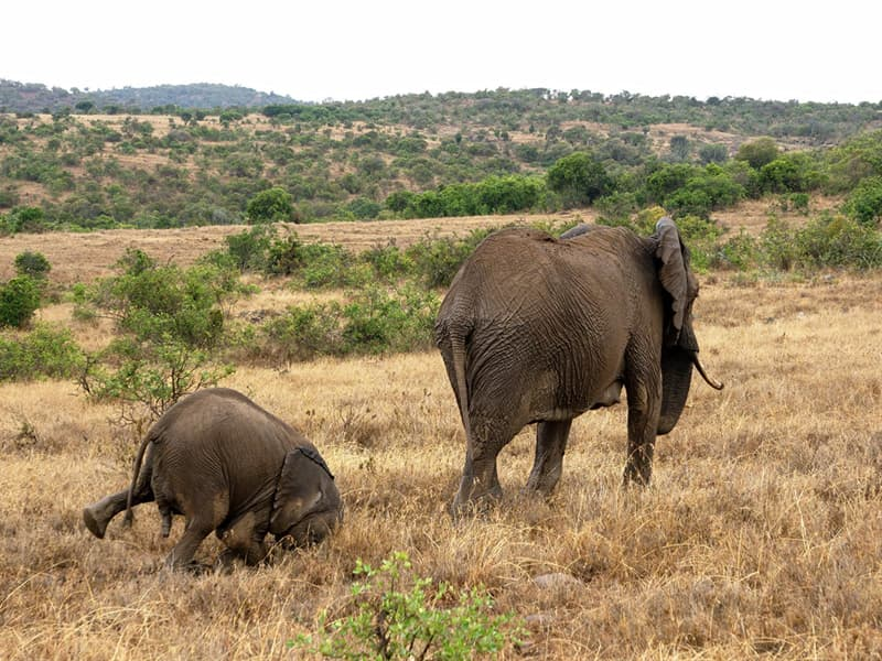 Nature Story: funny elephants Tim Hearn photo Photography funny animals funny quiz questions happy birthday funny animals weird animals funny pictures of animals funny photos cool photos 2020 really cool photos download Comedy Wildlife Photography Awards 2020
