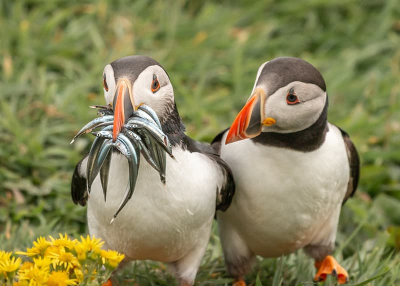 Nature Story: funny birds Krisztina Scheeff photo Photography funny animals funny quiz questions happy birthday funny animals weird animals funny pictures of animals funny photos cool photos 2020 really cool photos download Comedy Wildlife Photography Awards 2020