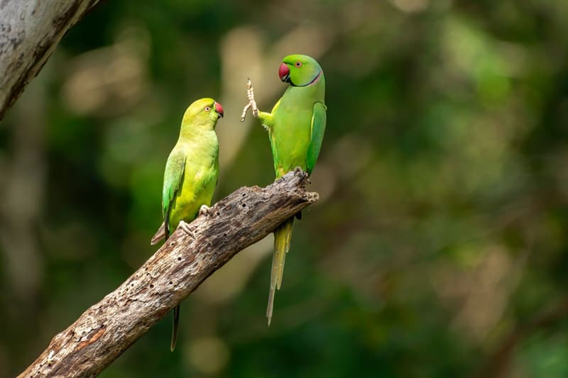 Nature Story: funny parrots Petr Sochman photo Photography funny animals funny quiz questions happy birthday funny animals weird animals funny pictures of animals funny photos cool photos 2020 really cool photos download Comedy Wildlife Photography Awards 2020