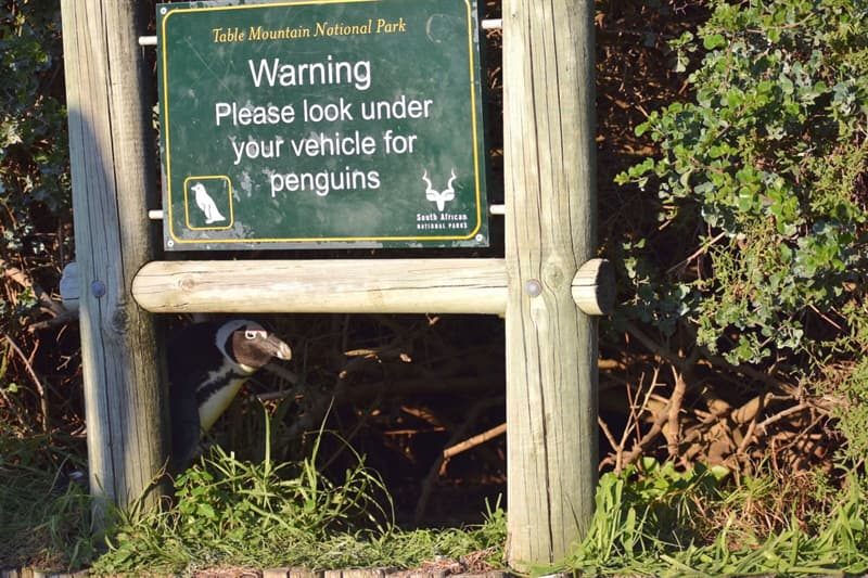 Nature Story: funny Penguins Pearl Kasparian photo Photography funny animals funny quiz questions happy birthday funny animals weird animals funny pictures of animals funny photos cool photos 2020 really cool photos download Comedy Wildlife Photography Awards 2020