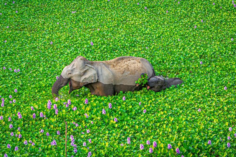 Nature Story: funny elephants Kunal Guptaphoto Photography funny animals funny quiz questions happy birthday funny animals weird animals funny pictures of animals funny photos cool photos 2020 really cool photos download Comedy Wildlife Photography Awards 2020