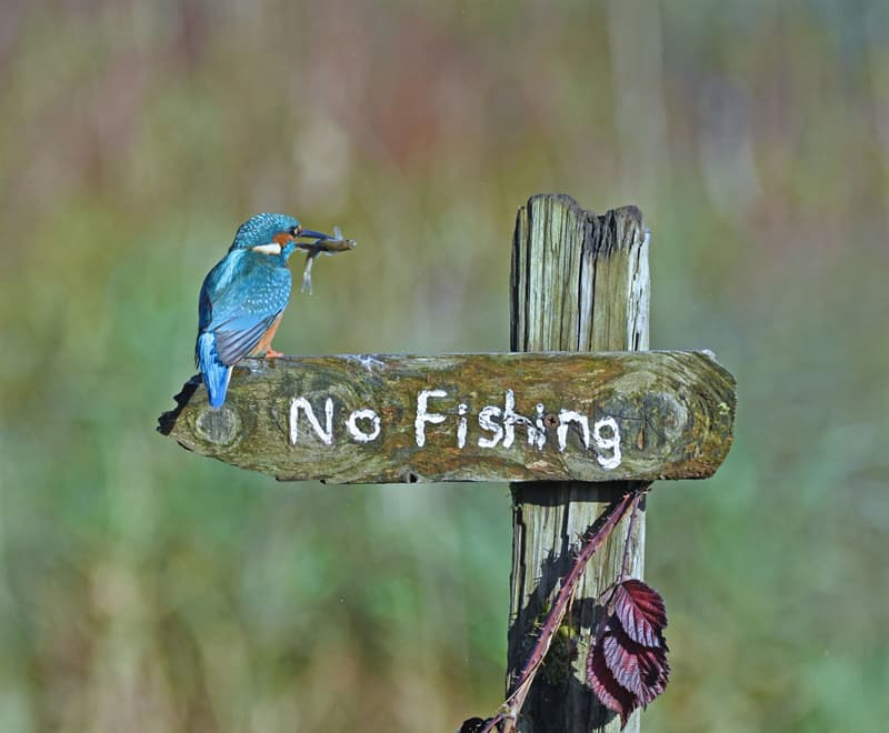 Nature Story: No Fishing sign funny birds Sally Lloyd Jones photo Photography funny animals funny quiz questions happy birthday funny animals weird animals funny pictures of animals funny photos cool photos 2020 really cool photos download Comedy Wildlife Photography Awards 2020