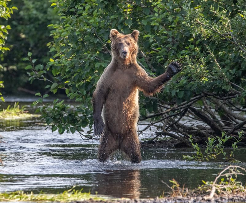 Nature Story: funny bears Eric Fisher photo Photography funny animals funny quiz questions happy birthday funny animals weird animals funny pictures of animals funny photos cool photos 2020 really cool photos download Comedy Wildlife Photography Awards 2020