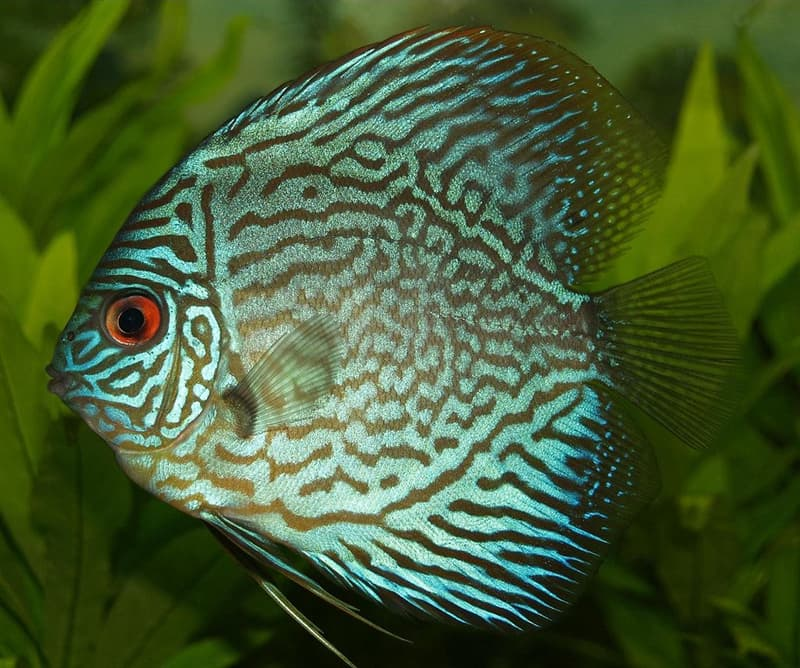 Nature Story: #9 Discus