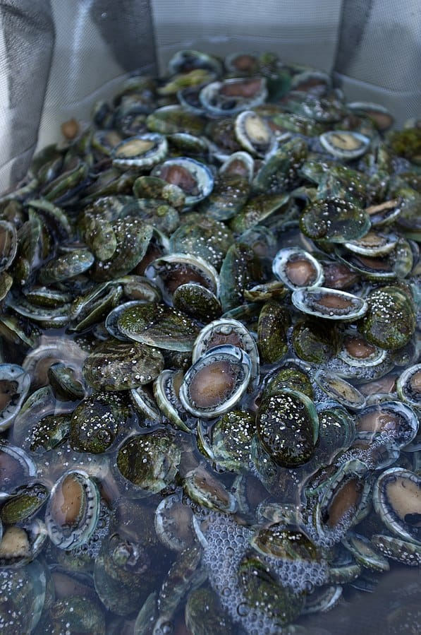 Science Story: #2 Farmed oysters