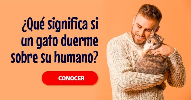Naturaleza Historia: ¿Si un gato duerme sobre su humano, ¿significa esto que está unido a el?