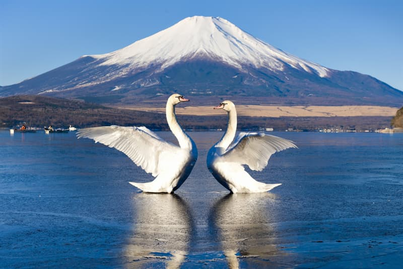 Culture Story: #3 In Japan, you can see amazing animals any time you want