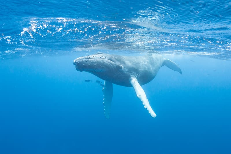 Science Story: #2 Whales are the most famous singers in the ocean.