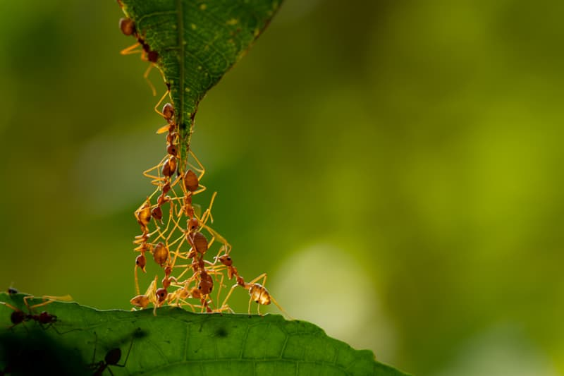 Science Story: #4 Ants are farmers and pet lovers too.