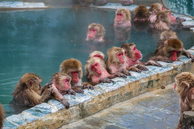 Science Story: #5 Monkeys have a complex communication system.