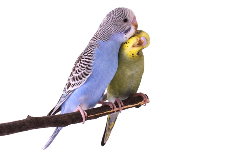 Science Story: #6 Parrots give their kids names.