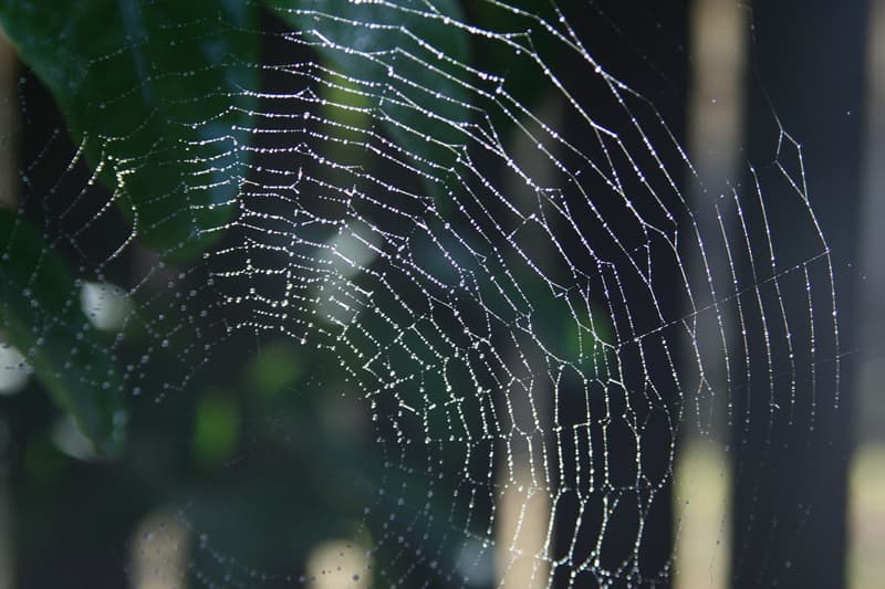 Culture Story: #5 Spiders were the only web designers
