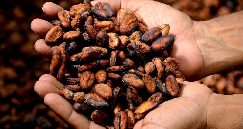Culture Story: #9 It takes 400 cocoa beans to make one pound of chocolate.