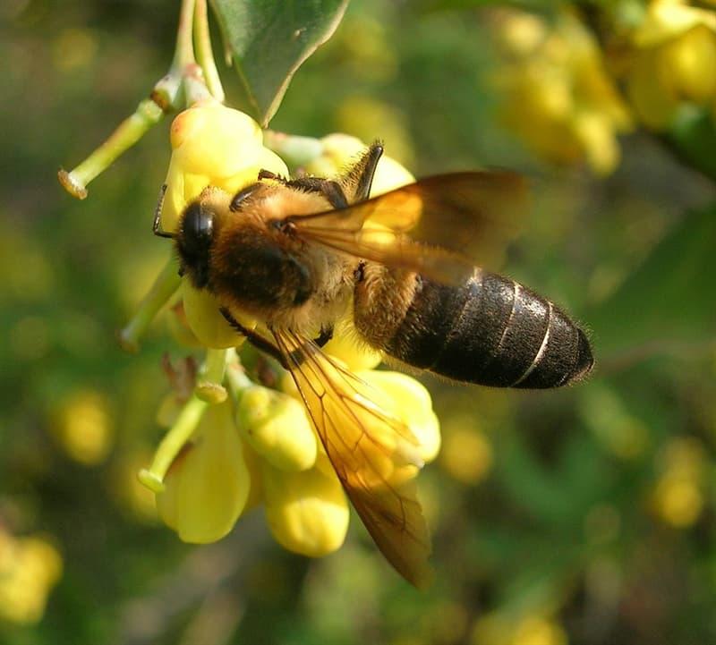 "Culture Story: #2 Nepalese honey hunters climb high altitudes to retrieve ""mad honey"""