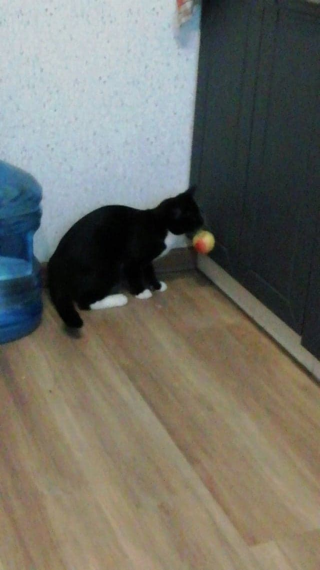 """animals Story: #3 This cat's definitely not letting go of """"his"""" apple."""