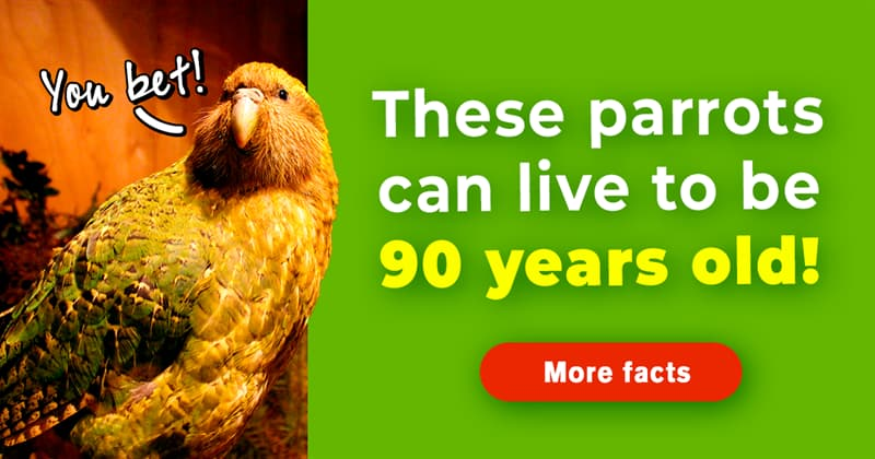 Nature Story: 10 untold facts about kakapo, the heaviest parrots on Earth