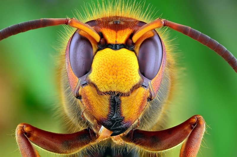 Culture Story: #7 This extreme close up photo of a hornet is so detailed