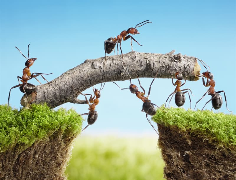 Culture Story: #9 See how teamwork looks in the eyes of these ants...