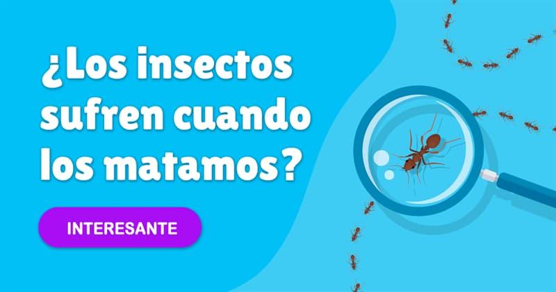 Сiencia Historia: ¿Los insectos sufren cuando los matamos?