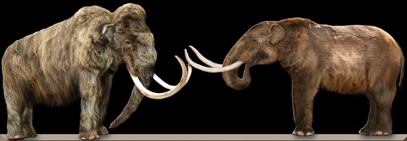 Culture Story: #2 Mastodon