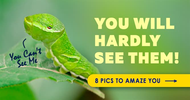Nature Story: 10 camouflage masters of the animal kingdom