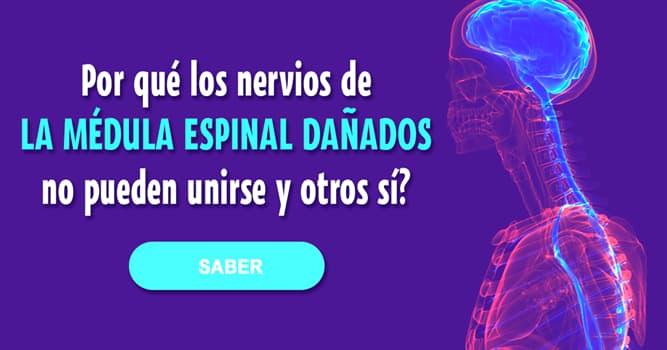 Сiencia Historia: Por qué los nervios de la médula espinal dañados no pueden volver a unirse y los de una mano trasplantada, sí?