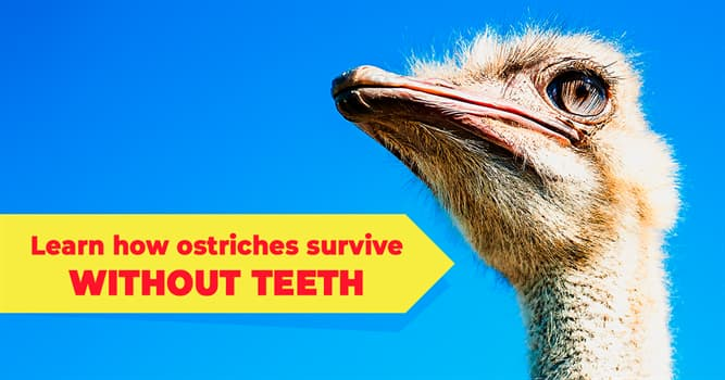 Nature Story: 5 captivating ostrich facts