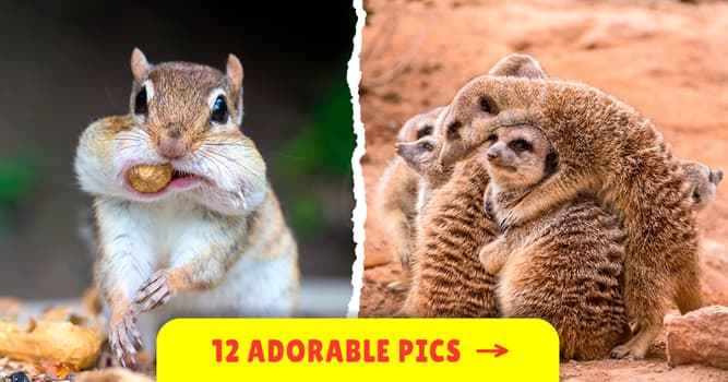 Nature Story: These hilarious animal pictures will crack you up