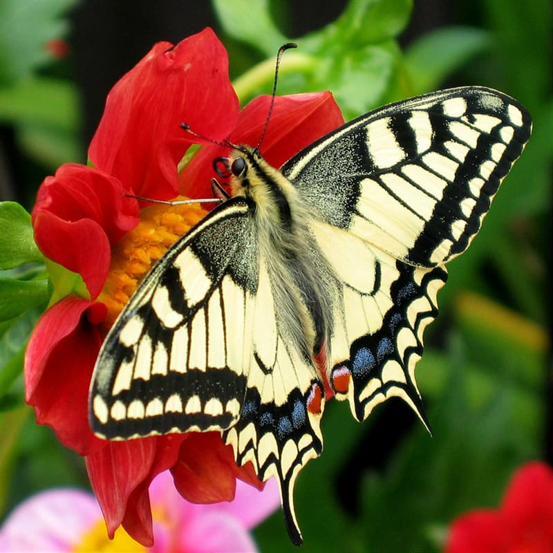 Science Story: #4 BUTTERFLIES: butterflies smell things using their feet.