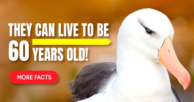 Nature Story: 5 interesting facts you didn't know about albatrosses