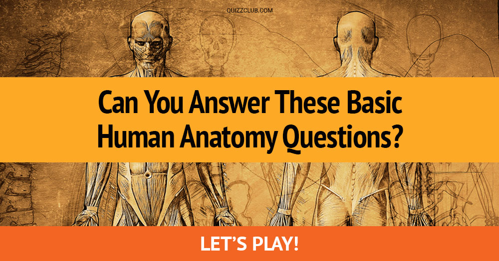 Can You Answer These Basic Human... | Trivia Quiz | Quiz Club