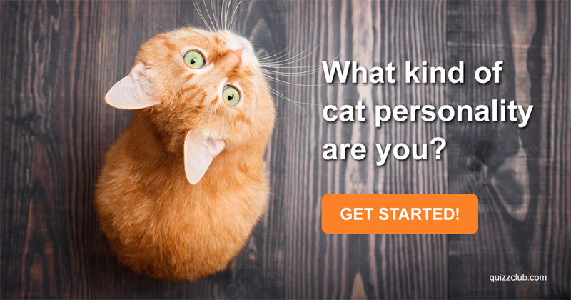 What Kind Of Cat Personality Are You?