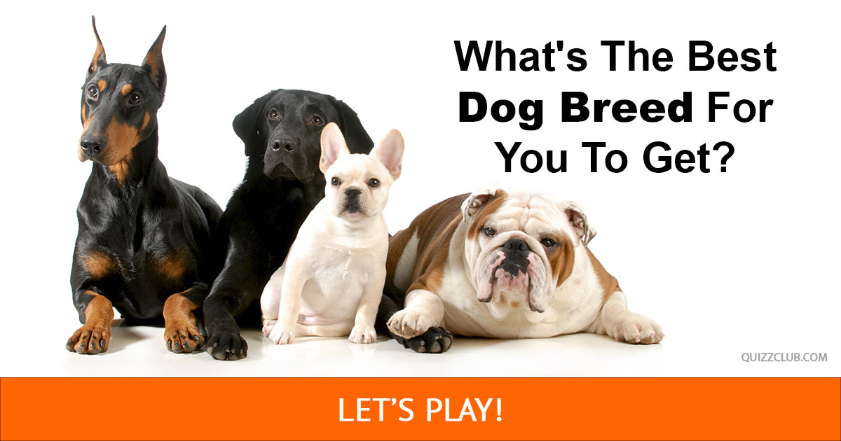 What 39 s the best dog breed for you to personality test for Best dogs for you