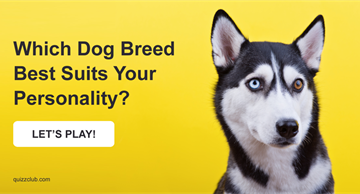 Quiz Test: Which Dog Breed Best Suits Your Personality?
