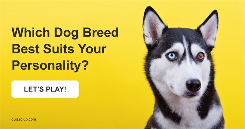Which Dog Breed Best Suits Your Personality?