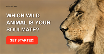 Quiz Test: Which Wild Animal is Your Soulmate?