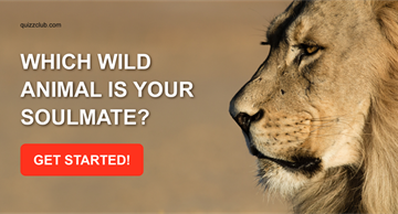 Personality Quiz Test: Which Wild Animal is Your Soulmate?