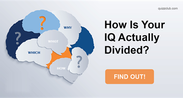 Personality Quiz Test: How Is Your IQ Actually Divided?