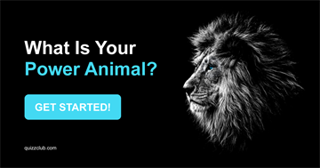Quiz Test: What Is Your Power Animal?