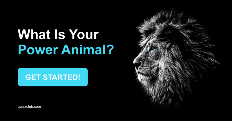 Test: What Is Your Power Animal?