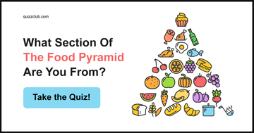 Quiz Test: What Section Of The Food Pyramid Are You From?