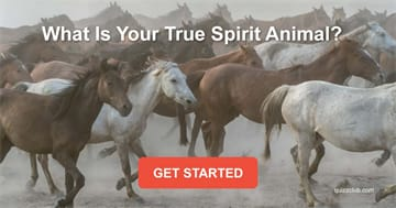 Personality Quiz Test: What Is Your True Spirit Animal?