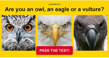 Quiz Test: Are you an owl, an eagle or a vulture?