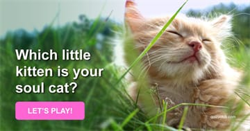 Quiz Test: Which Little Kitten Is Your Soul Cat?