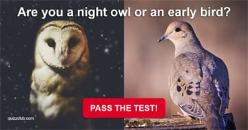 Personality Quiz Test: Are You A Night Owl Or An Early Bird?