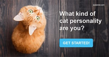 Quiz Test: What Kind Of Cat Personality Are You?