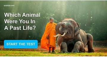 Personality Quiz Test: Which Animal Were You In A Past Life?