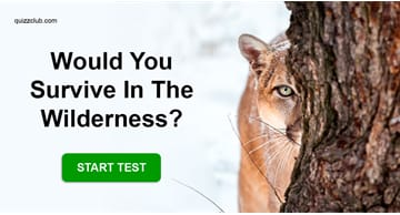 Personality Quiz Test: Would You Survive In The Wilderness?