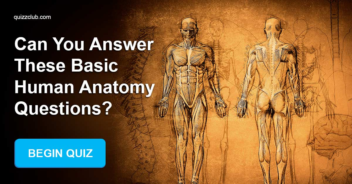 Can You Answer These Basic Human Trivia Quiz Quizzclub